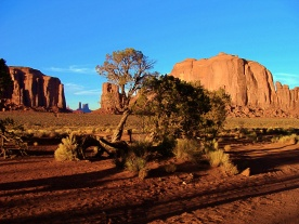 Monument Valley Trees