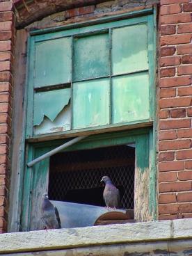 Memphis Window