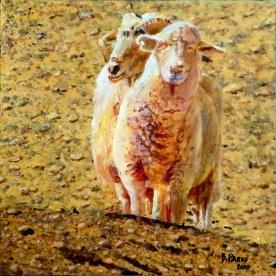 Nativity: Sheep