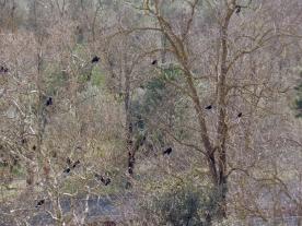 Orvieto Birds