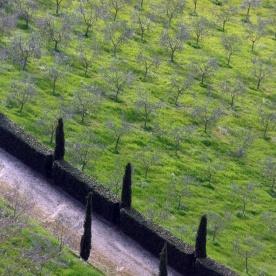 Orvieto Orchard