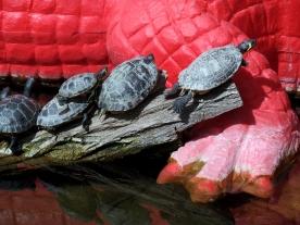 Rome: Zoo Turtles