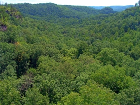 Forested Valley