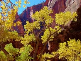 Zion NP Autumn Color