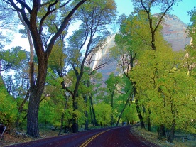 Zion NP Road