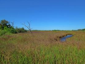 San Jacinto Marsh