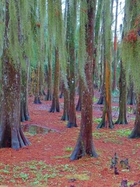 Avery Island Trees