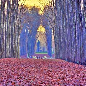 Versailles Garden Vista